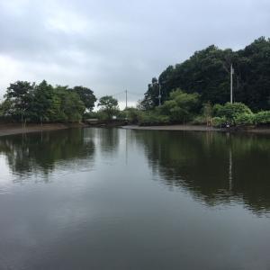 四ツ谷池 減水シーズン始まる!