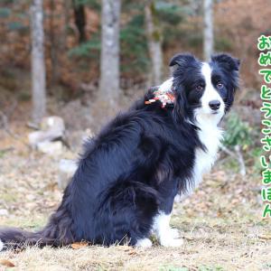 2019謹賀新年!僕のお山に誘うぽん★