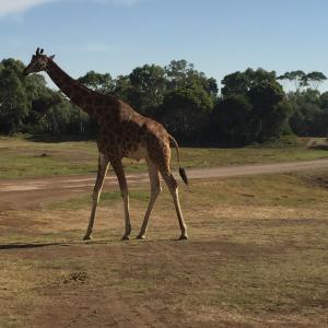 ウェロビーのサファリ動物園に行ってきました!