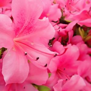 遅咲きの花とカノン♪