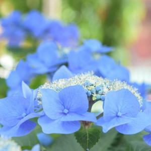 浅草寺参拝―青と緑のトーン―