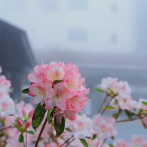 春の三峯神社参拝