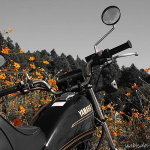 コスモスと、バイク写真☆里山カフェ【ゆうふう】にて