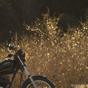梅とバイク写真撮影を楽しむ