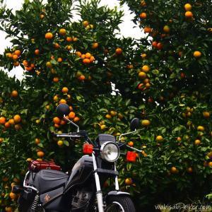 【ミカン】とのバイク写真を集めてみた