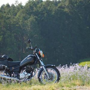 野花と楽しむバイク写真撮影☆マツバウンラン編