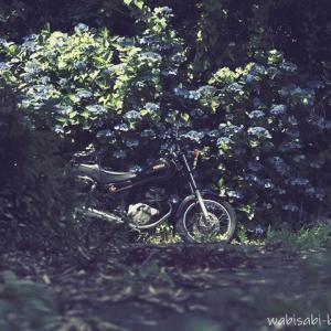 紫陽花とバイク写真撮影☆初心者がゼロから挑んだ8年記録