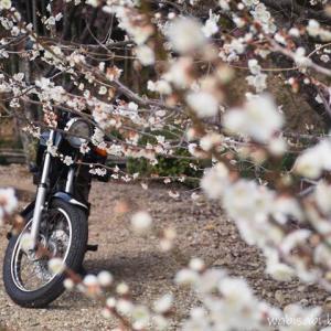 簡単・お手軽!バイク乗車時の花粉症対策
