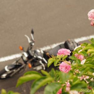初夏の野花と、バイク写真☆YAMAHA SR125
