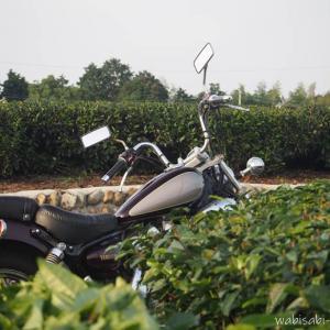 【茶畑】愛しのバイク散歩道☆22年目のビラーゴ