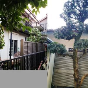「自宅外壁塗装前の庭木伐採」