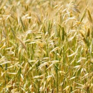 健康志向が加速中。パンまで雑穀ミックス!