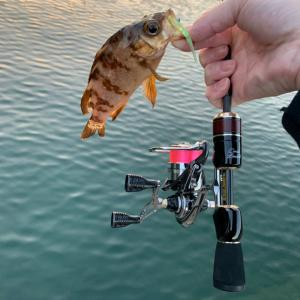 釣り日和。。。
