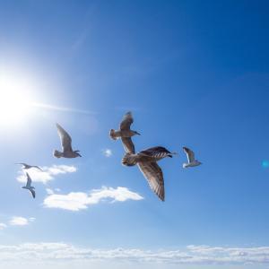 鳥之石楠船神
