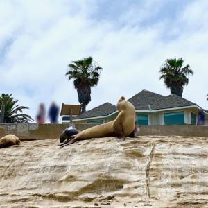 天然のアシカやアザラシが目の前に!サンディエゴの観光スポット「ラ ホヤ コーヴ (La Jolla Cove)」