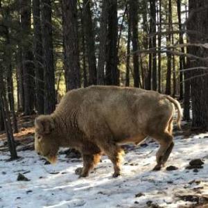 アリゾナの動物たち