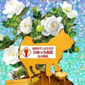 ☆ワンズエステ☆永久会員様名簿♡2021年6月19日更新♡