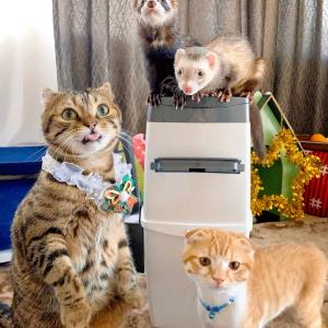 猫砂の処理ボックス リターロッカーⅡ