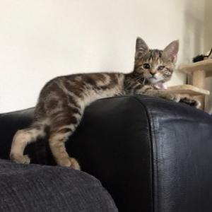 保護猫カフェや保護主さん!