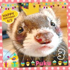 今日は、ぷくちゃんのお誕生日♫