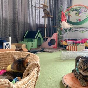 お利口さん猫⁈友子の爪切り動画♪【あにまる まま】