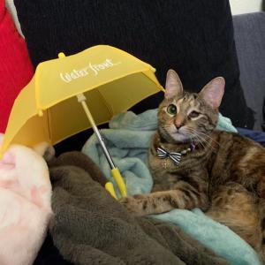 雨の日の幼稚園に行きました♪