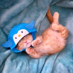ペンギンに変身した子猫ちゃんฅ•ω•ฅ