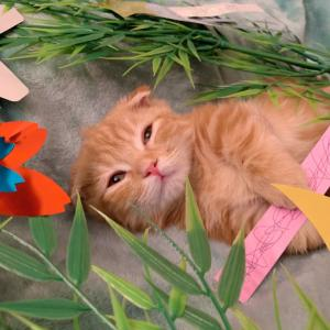 子猫のひなちゃん、初めての七夕【あにまる まま】