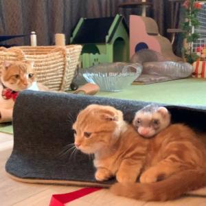 子猫の成長や兄弟愛が分かる動画 【あにまる まま】