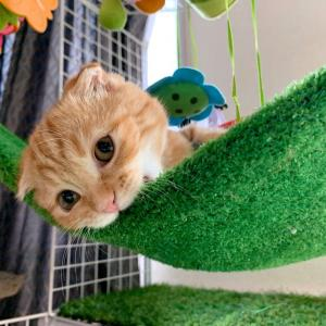 子猫パワーで元気いっぱーい!!