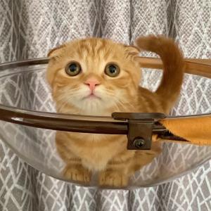 みかんを食べたい子猫ちゃん…【あにまる ファミリー】