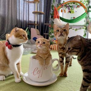 コーヒーカップにインしたよ♪
