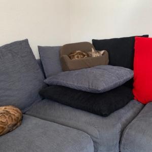 段々重ねて小さなソファー【あにまる まま】