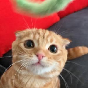 猫じゃらしハッスル♪