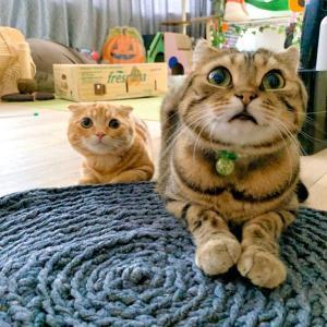 子猫と大人の大と小…♪