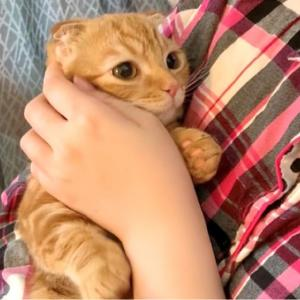6ヶ月の赤ちゃん子猫のモーニングルーティン【あにまる まま】