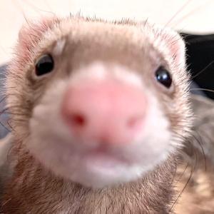 鼻でかアップかわいい…♪