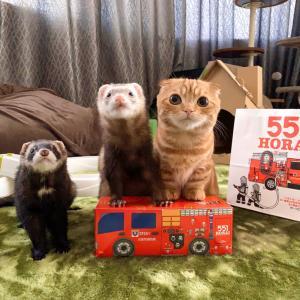 猫ちゃん&フェレットちゃん火の用心♪【あにまる まま】