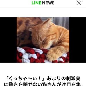 LINEニュースに子猫のひな子ちゃん♪