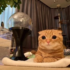 こんな時期に、水遊び⁈【あにまる まま】子猫・フェレット