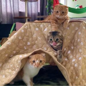 新商品⁈二段コタツを子猫達にプレゼントしたら…【あにまる まま】