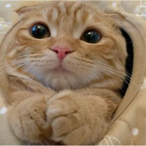 子猫のひな子がコタツの穴からもじもじ♪