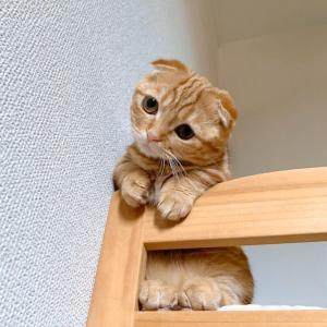 まだ子猫ちゃんなのに、ぶりっ子女子