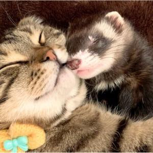 猫やフェレットを迎える(飼う)時に注意する事
