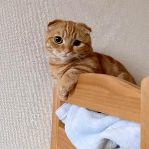 あざといが得意な 子猫のひな子