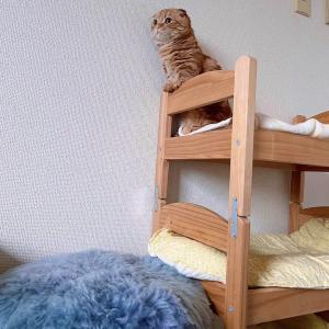 生まれて初めてマタタビを子猫が試したら…笑【あにまる まま】