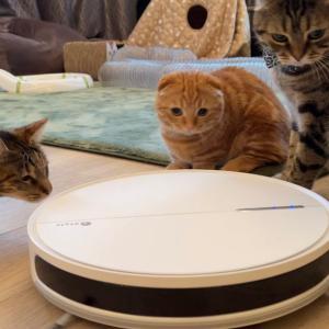 ロボット掃除機を子猫と兄猫が運転します…【あにまる まま】