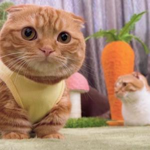 術後服からはみ出る猫毛ちゃん…