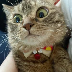 今夜YouTube Live(生配信)します!6猫2フェレット
