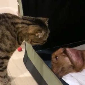 「老犬の深い眠りは怖い」と「甘えたい猫を無視したら…」